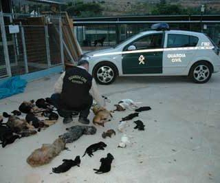 Parque Animal, Torremolinos, comienza el juicio.