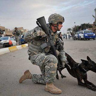El American Kennel Club acaba de publicar una nota de prensa con las seis razas más populares en trabajos militares. Algunas las conocíamos, pero otras nos han resultado sorprendentes.