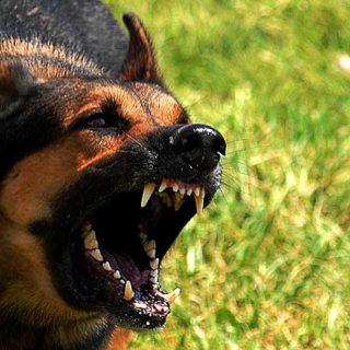En la mayoría de programas de modificación de conductas el guía maneja el umbral (la distancia), el perro no lo debe superar, y para que esto suceda debemos conocer cuál es exactamente la distancia que debemos manejar con seguridad.