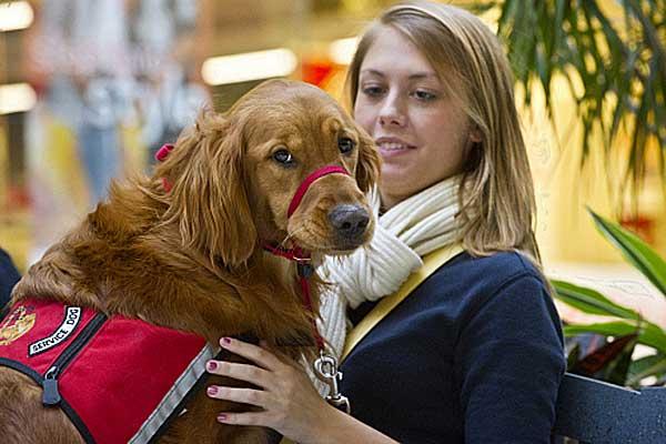 Perros de terapia que ayudarán a los veteranos de guerra.