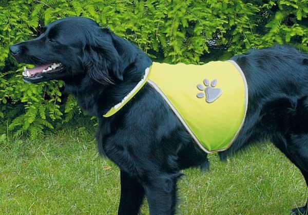 Los atropellos de perros en entornos urbanos durante los meses de menos luz, se pueden evitar mejorando la visibilidad de animales y dueños.