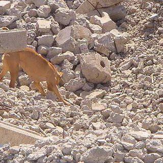 Exigir un nivel sólido de eficacia y rigurosidad a las Unidades Caninas de Rescate constituye un deber oficial, urgente y vital.
