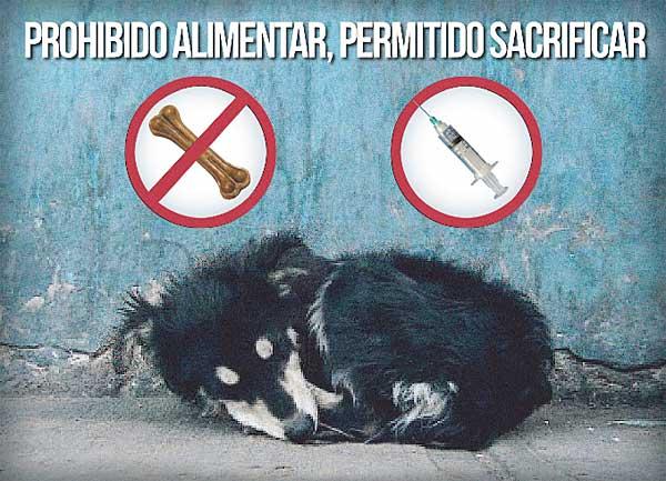 Por el sacrificio cero de animales en Madrid.