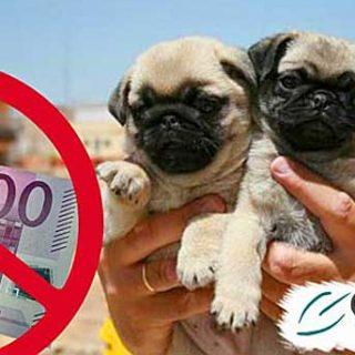 El Colectivo Andaluz contra el Maltrato Animal presentó el Jueves día 22 de diciembre la primera denuncia a un particular por la venta ilegal de perros en Málaga.