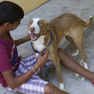 La historia real de Cani, del abandono a la terapia. Una historia... de Navidad.