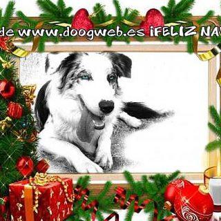Desde doogweb te queremos desear una Feliz Navidad, recuerda que también puedes encontrarnos en Facebook y Twitter.