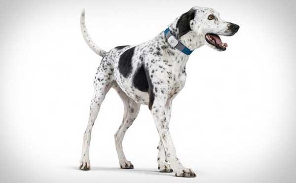 Localizador gps para perros.