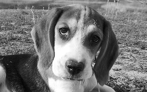Flores de Bach efectivas para el miedo a los petardos en los perros. Empezar con el tratamiento 10 días antes.