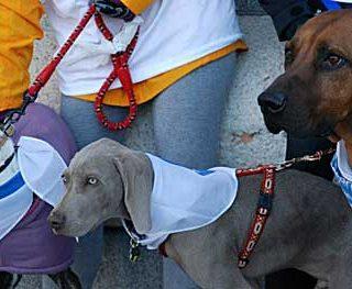 """Los perros toman las calles de Madrid en """"La Sanperrestre"""" de El Refugio (vídeo)."""