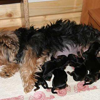 Cachorros en tiendas... Consecuencias de tener a un cachorro de perro en un habitáculo cerrado y estrecho. Por Inmaculada Marrero Naranjo.