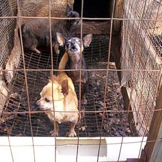 El 1 de enero de 2012 ha entrado en vigor una nueva Ley de protección animal que se centra en la prohibición de cría masiva de cachorros en Irlanda.
