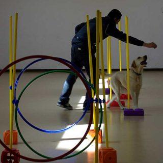 El Grup-Agility es una adaptación de agility a personas con discapacidades físicas o mentales.