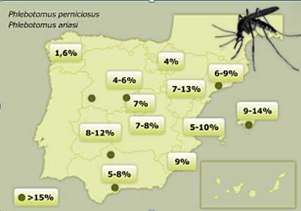 La leishmaniosis en España.