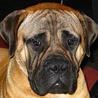 Cáncer, Insuficiencia Renal y problemas Cardiovasculares son las tres principales causas de muerte en perros mayores.