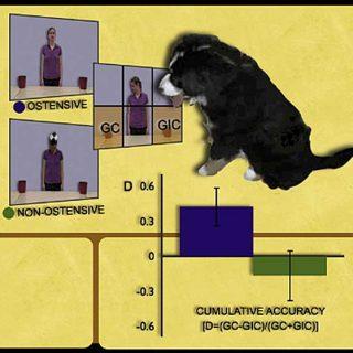 El funcionamiento sociocognitivo de los perros se asemeja al de un niño de 6 meses a 2 años de edad en muchos aspectos.