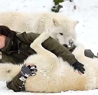 Tanja Eskani viajo en 2010 a Canadá. De allí trajo a Naaja, una cachorrita de lobo... (vídeo).