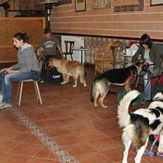 Adiestrador Canino y entrenador de clicker CAP1, Canarias.