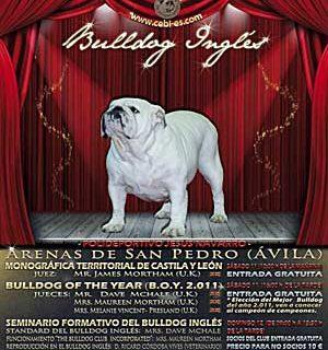 Monográfica bulldog en Arenas de San Pedro 2012.