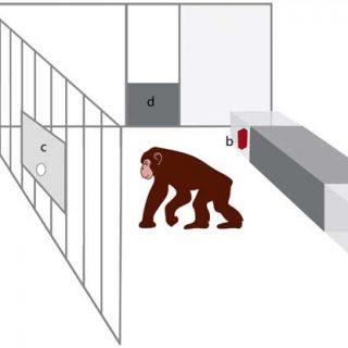 Los perros son muy hábiles en la interpretación de señales comunicativas humanas, ahora se ha demostrado que superiores a los chimpancés.