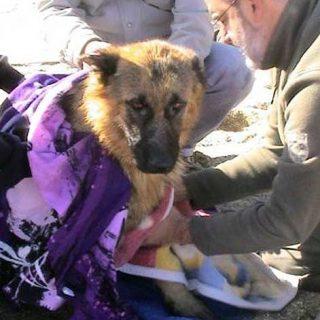 Vídeo del rescate de un pastor alemán en el embalse de Valmayor.