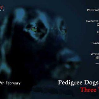 """Segunda parte del famoso documental """"Pedigree dogs exposed"""", en el que se denuncian los problemas en algunas razas de perros."""