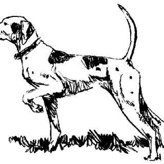 Salamanca: Más de treinta perros, dos milanos reales, seis busardos ratoneros y un cuervo murieron a causa de la ingestión de veneno.