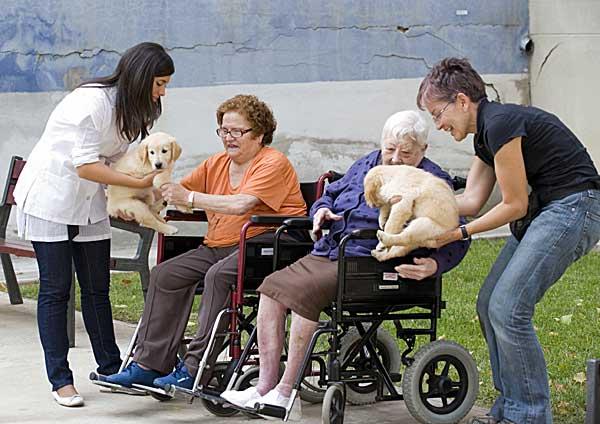 Perros de terapia en ambulatorios.