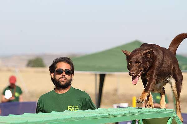 Agility. Cómo fotografiar perros en acción.