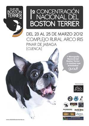 Primera Concentración Nacional del Boston Terrier del 23 al 25 de marzo próximos en el Complejo Rural Arco Iris (Pinar de Jábaga, Cuenca).