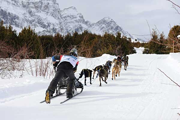 Los mejores mushers españoles se citan en Baqueira Beret, en el Campeonato de España de Trineos sobre Nieve.
