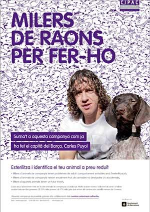 Campaña de esterilización en Cataluña con grandes descuentos.