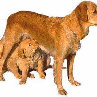 Facebook prohíbe los anuncios de cachorros. Ya han sido retirados más de 10.000 pero la campaña sigue activa.