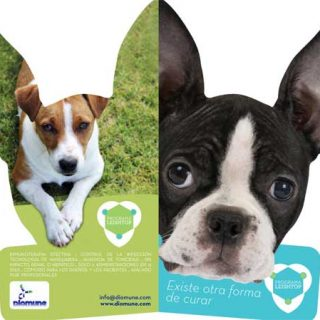 Leishtop es una nueva autovacuna para perros positivos en Leishmania que reduce la gravedad de los signos clínicos.
