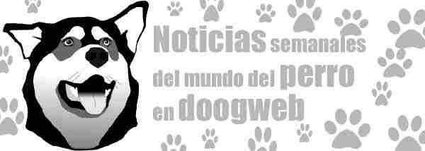 Noticias de perros de la semana del 12 al 18 de marzo.