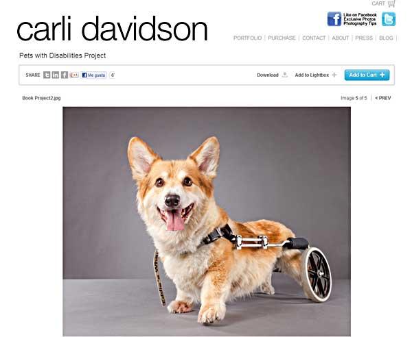 Pets with Disabilities Project quiere demostrar que los perros que padecen lo que los humanos denominamos discapacidades, pueden ser igualmente felices en sus familias.