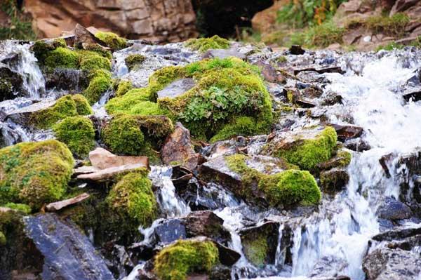 Flores de Bach y perros: Rock Water (Agua de Roca) - www.doogweb.es