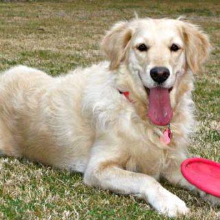 El juego es parte esencial en el desarrollo mental del perro, pero... ¿jugamos bien con nuestros perros?