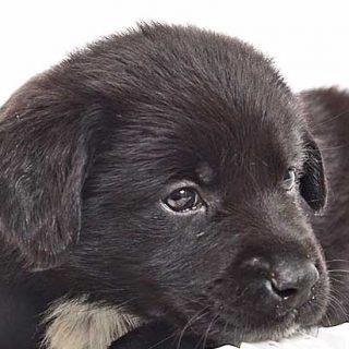 Productos presentes en las casas que son toxicos o mortales para los perros. Desde el paracetamol hasta el café...