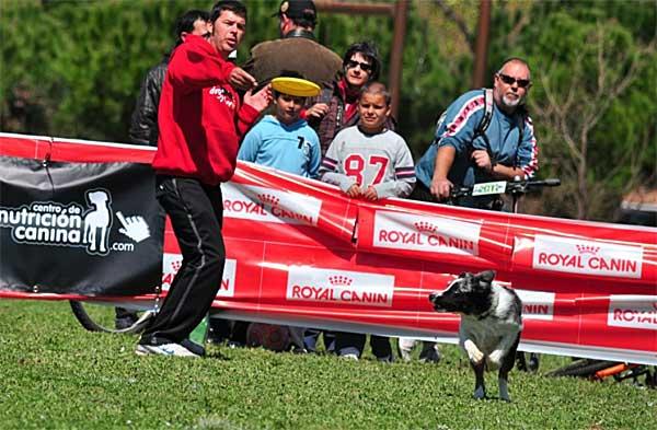 Dog frisbee: El pasado 7 de abril se celebró en En el Parc Central del Vallès (Sabadell/Barberà del Vallès) la primera AWI Qualifier del 2012.