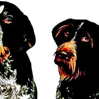 ¿Cómo se comportan los perros cuando su capacidad de auto-control se supera? ¿Son más propensos a acercarse a las situaciones de peligro o permanecer sanos y salvos?