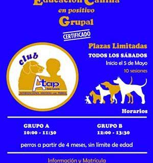 Cursos en grupo de iniciación al adiestramiento canino en positivo, en Arucas (Canarias), con ATAPGC.