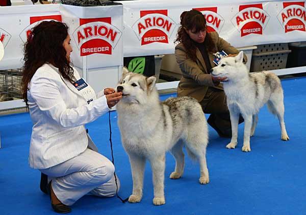 II Exposición Nacional Canina de Esquivias, con especial de retrievers y dogo alemán. Cómo llegar, horarios...