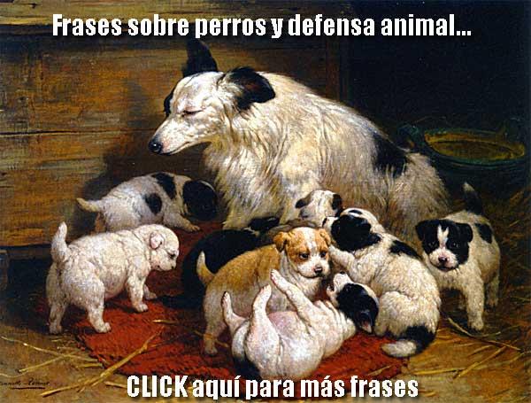 Más frases y citas sobre perros y defensa animal den doogweb.