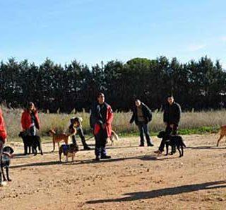 Nuevos cursos de Lifskills (habilidades sociales) y Jugar con tu perro, con Hellen Phillips en Madrid.