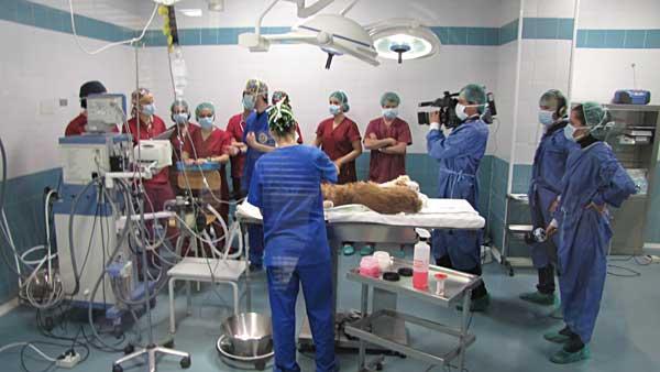 ¿Cómo es el día a día en el hospital veterinario de la Universidad Alfonso X el Sabio (UAX)?