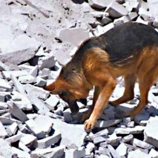 Unidades Especiales de diez países se formarán con Método Arcón rescate canino en Bolivia.