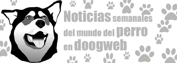 Noticias de perros, de la semana del 2 al 8 de abril.