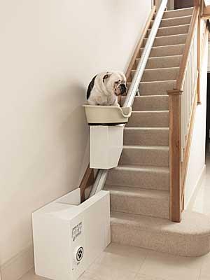 La obesidad canina es un problema muy serio y al alza en todos los países de nuestro entorno. Curiosa campaña de la compañía More Than.