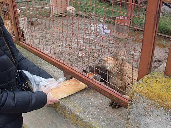 PACMA denuncia el estado de dos perros en Las Hervencias