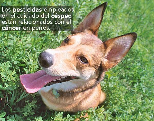 Los pesticidas aumentan la incidencia del cáncer en perros